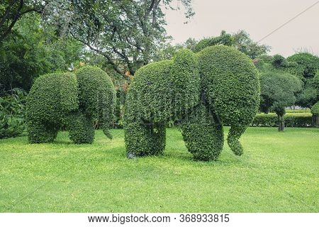 Cute Elephants Family Shaped Topiary On Green Lawn In Public Park In Thailand. Trimming Ornamental S
