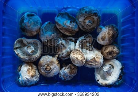 Aerial View Of Moldy Champignon Mushrooms In A Blue Plastic Container Symbolizing Food Waste