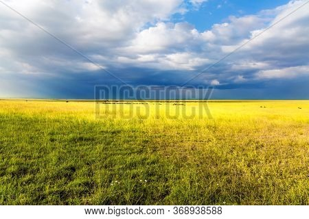 The Horn of Africa. Travel to tropical Africa. Gorgeous cumulus clouds pile up over a grassy savannah. The concept of ecological, exotic, extreme and photo tourism