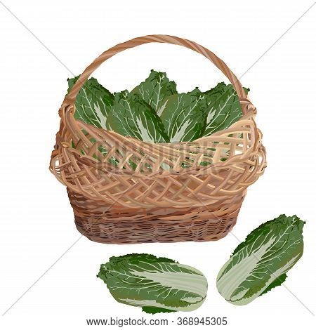 Wicker Basket Full Of Fresh Chinese Napa Cabbage, Vector Illustration Isolated On White Background.