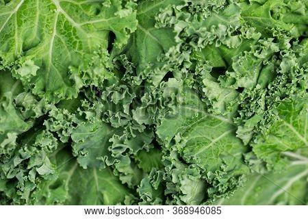 Kale Salad Leaf With Water Drops Macro