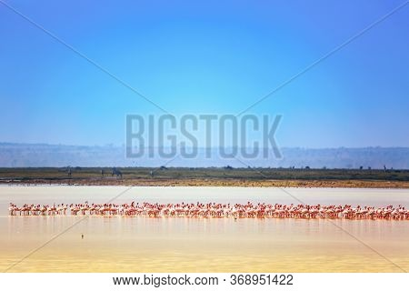Beautiful Landscape In Kenya Amboseli National Park With Lake And Flamingos. Lesser Flamingo Phoenic