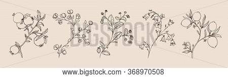 Lemons On A Tree, Pomegranate Fruits, Cotton Flowers, Strawberriesin Vector Line Style. Hand Drawn C