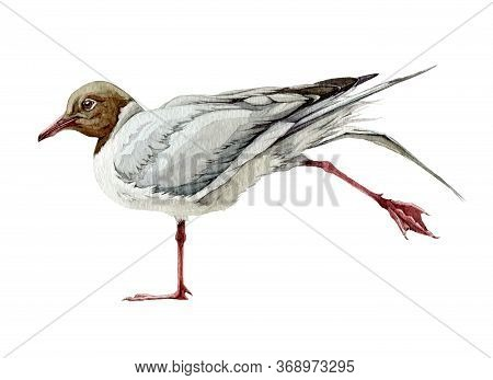 Grey Seagull Bird Watercolor Illustration. Hand Drawn Wild Seaside Bird With Red Legs. Seagull Isola