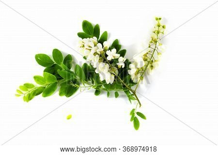 A Branch Of White Acacia Flowers Isolated On A White Background. Robinia Pseudoacacia Black Locust,