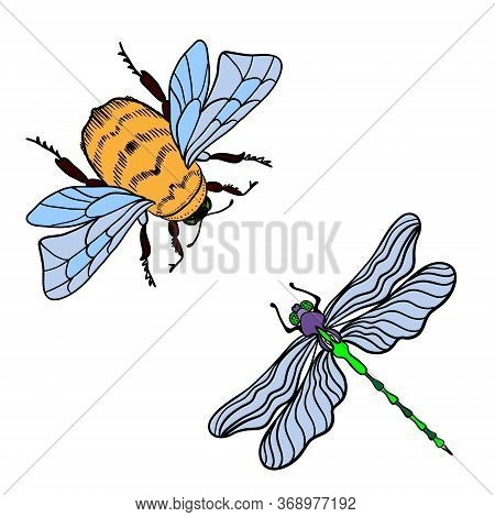 Bright Dragonfly And Bumblebee On A White Background Isolated. Black Outline Hand Drawn Vector Illus