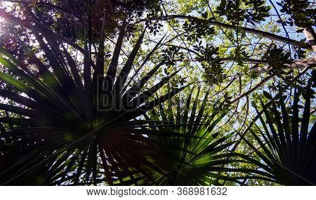 Healthy Nature Of The Ancient Mayan City Of Tulum In Quintana Roo, Mexico.