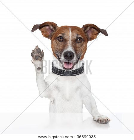 hello goodbye high five dog with open mouth poster