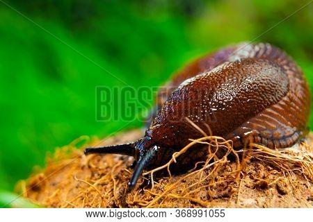 Brown Slug Crawling On A Tree Stump Against A Grass Background