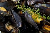 Fresh mussels with herbs for background use poster