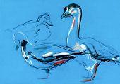 Oldgrunge original pastel and hand drawn working sketch of a goose (anseris). poster
