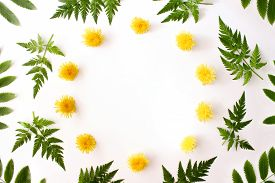 Wreath With Spring Yellow Dandelion Flowers And Fern Green Leaves Isolated Flat Lay On White Backgro