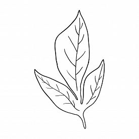 Leaf Contour Line In Black Isolated On White Background, Stock Vector Illustration For Design And De