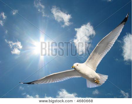 Seagull In Sunshine