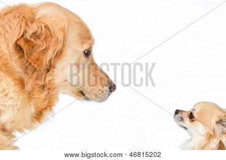 Big dog smal dog