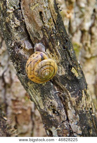 Gold snail on a tree trunk in Smoky Mountains