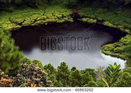 Lake    Tree And Hill