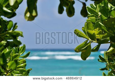 View Of The Sea And The Sky Between Plants