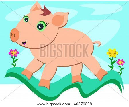 体验自由的猪