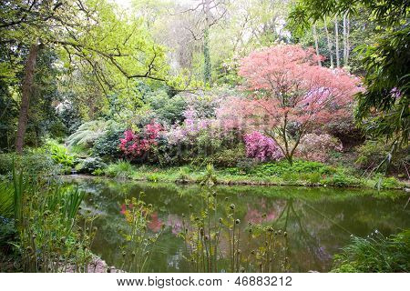 Blooming trees in the nature during spring