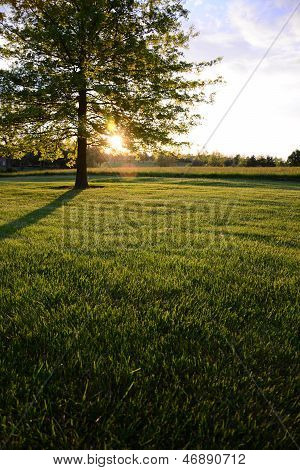 Lawn at sunrise