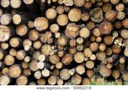 Section Plane Of Natural Wood Log Background