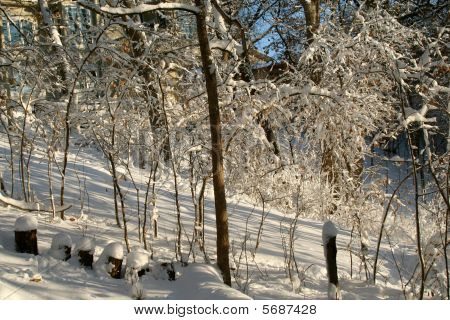 Winter Snow in the Woods