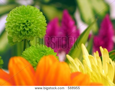 Colorful Flowers, Gerbera In Forground And Chrysanthemum