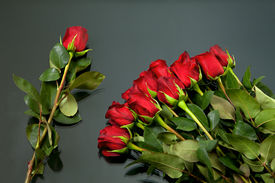 Red Rose Solitarie