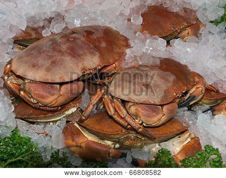 Fresh Shetland Crab on a market stall poster
