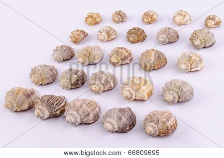 Set Of Seashells