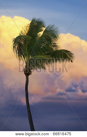 Palm Tree Tropical Sunset