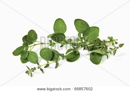 Sprigs Of Freshly Picked Origanum And Thyme