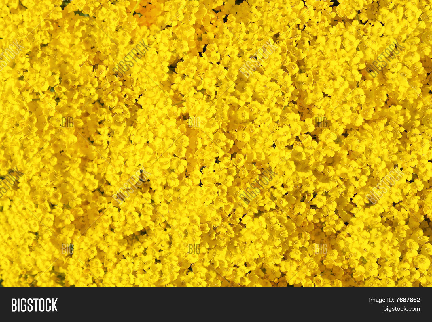 Real Yellow Flowers Background
