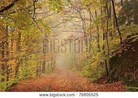 Path through misty autumnal forest