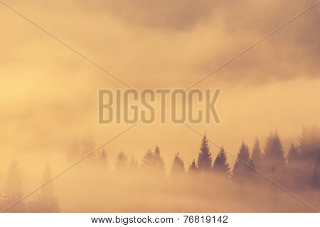 Beautiful Misty Morning In Mountains