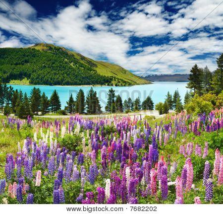 Lake Tekapo, New Zealand