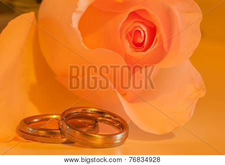 yellow rose with rings