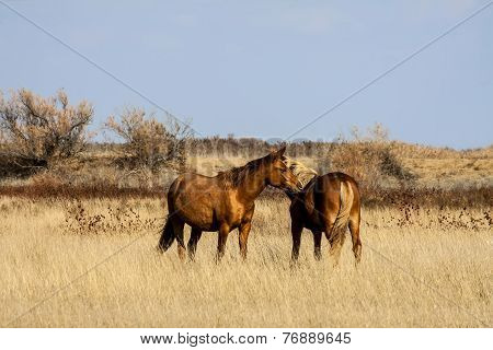 Steppe horse