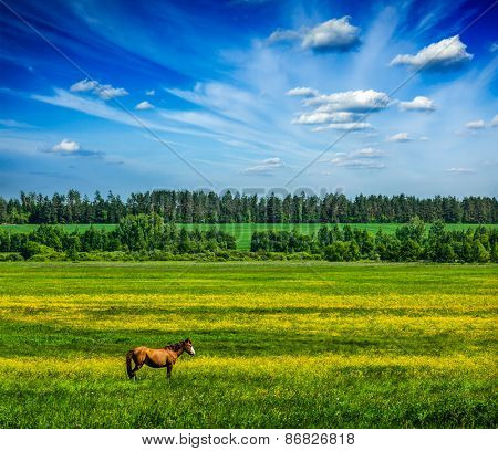 Spring summer background - green grass field meadow scenery lanscape under blue sky with grazing horse