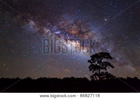 Silhouette of Tree and Milky Way, Long exposure photograph.