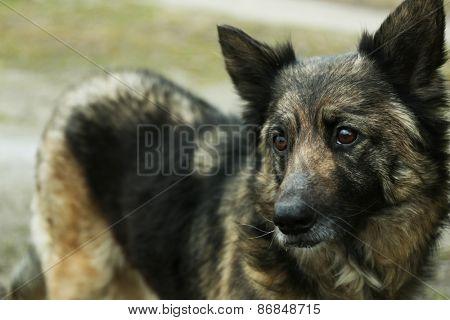 Mongrel dog outdoors