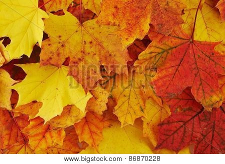 Ground covered with autumn leaves
