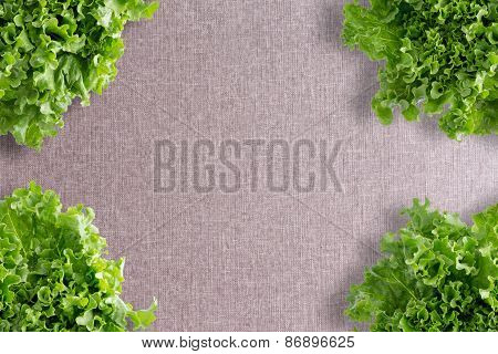 Crisp Fresh Frilly Green Lettuce Corner Border