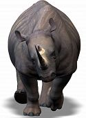 a rhinoceros is coming direct into your heart. poster
