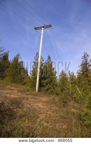 Overhead Telephone Pole In Woods