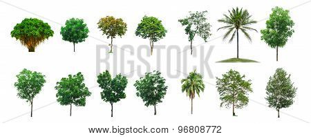 Trees Collection On White Isolate Background (clipping Path)