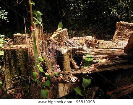 Cut-down rainforest