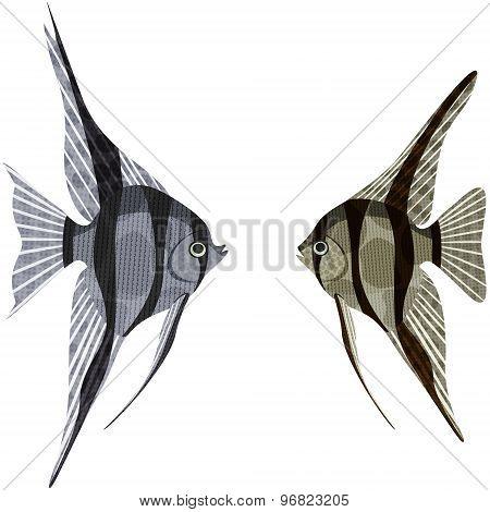 Exotic Aquarium Fish.