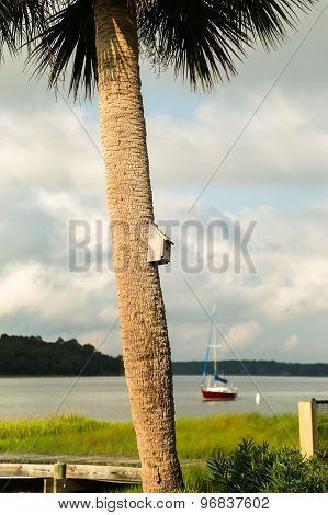 Palm Tree Along the River